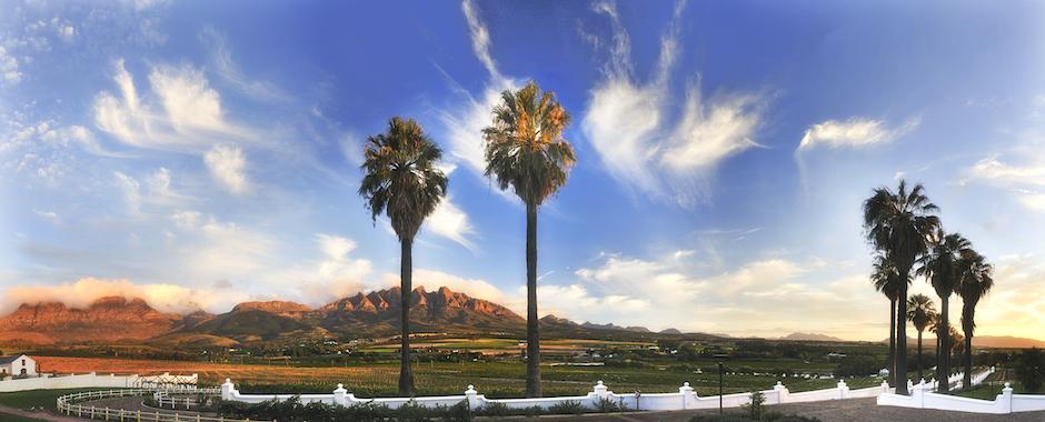 banner palms