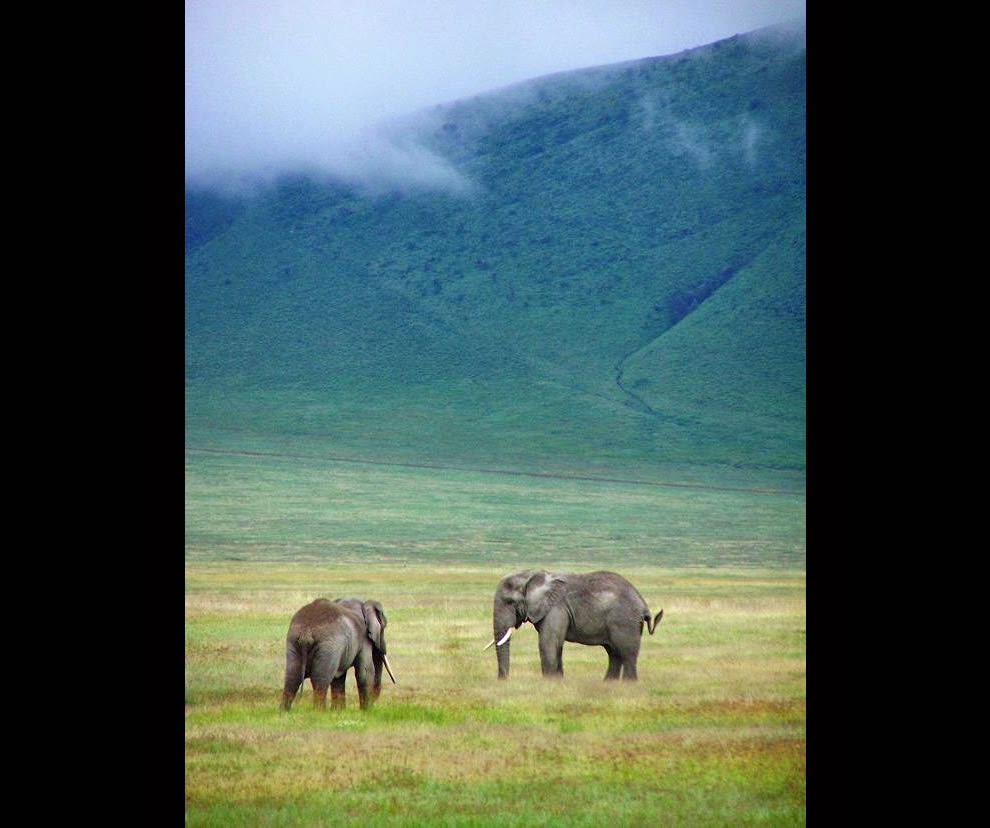 Elephants-in-Ngorongoro-Crater6
