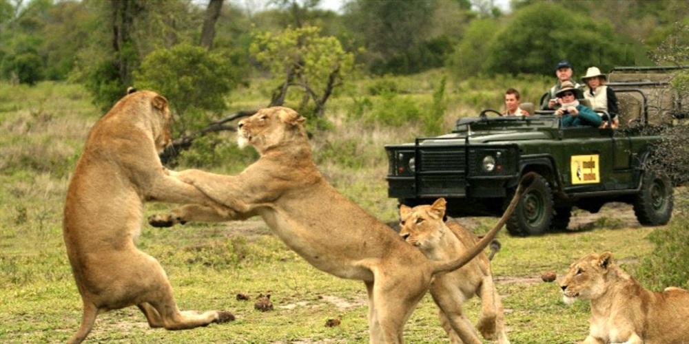 Lions_MalaMala 2