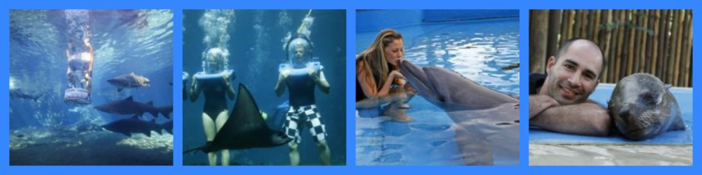 Images Courtesy: SeaWorld
