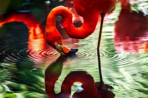 flamingo-1587279_960_720