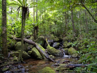 lowland_rainforest_masoala_national_park_madagascar