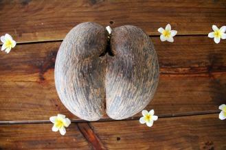 coconut-1028003_960_720