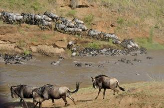 masai-migration
