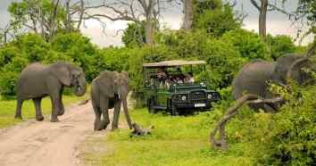 elephants-game-drive