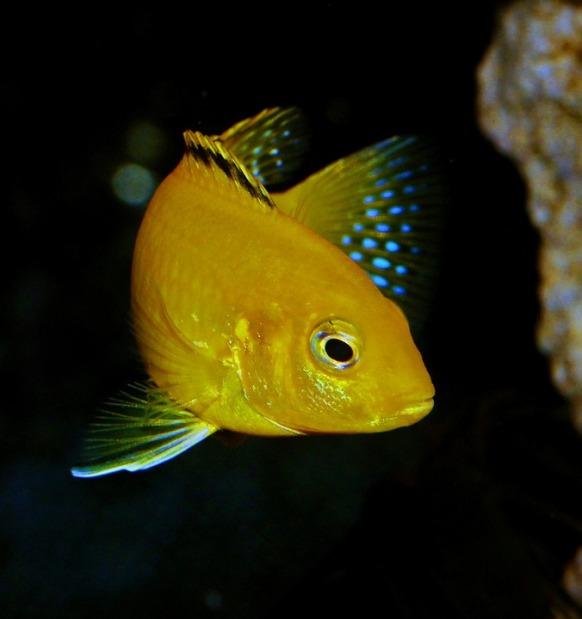 fish-774785_960_720