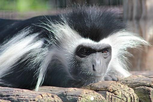 monkey-1152686__340