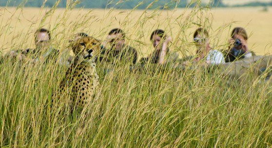 4-slide-zambia-walking-safari-cheetah-pano
