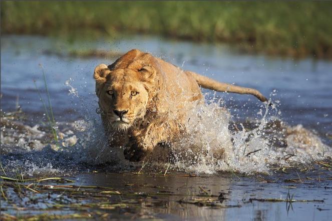 mw_Okavango_Delta_img (1)